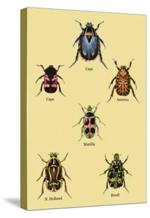 Beetles of Cape, America, Manilla, N. Holland and Brazil-Sir William Jardine-Stretched Canvas Print