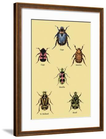 Beetles of Cape, America, Manilla, N. Holland and Brazil-Sir William Jardine-Framed Art Print
