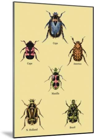 Beetles of Cape, America, Manilla, N. Holland and Brazil-Sir William Jardine-Mounted Art Print