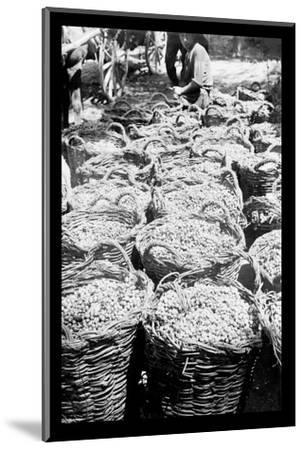 Baskets of Wine Grapes at Richon le Zion--Mounted Photo