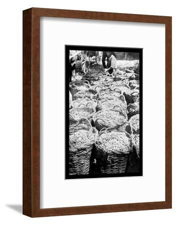 Baskets of Wine Grapes at Richon le Zion--Framed Photo