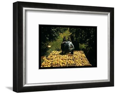 Hauling Crates of Peaches-Russell Lee-Framed Photo