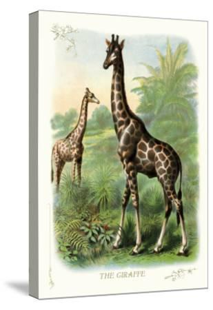 The Giraffe--Stretched Canvas Print