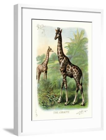 The Giraffe--Framed Art Print