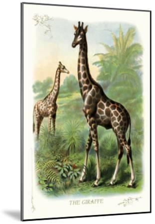The Giraffe--Mounted Art Print