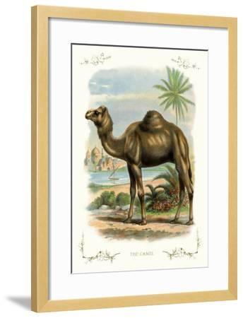 The Camel--Framed Art Print