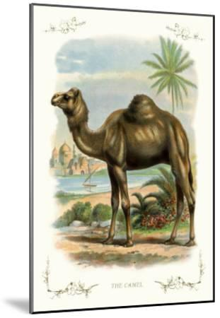 The Camel--Mounted Art Print