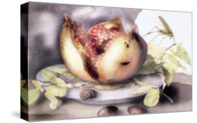 Dish with a Pomegranate, A Grasshopper, A Snail, and Two Chestnuts-Giovanna Garzoni-Stretched Canvas Print