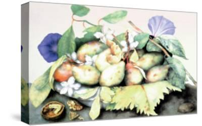 Dish of Plums with Jasmine and Walnuts-Giovanna Garzoni-Stretched Canvas Print
