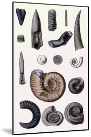 Shells: Cephalopoda-G^b^ Sowerby-Mounted Art Print
