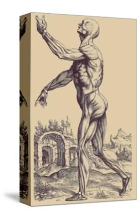 The Second Plate of the Muscles-Andreas Vesalius-Stretched Canvas Print