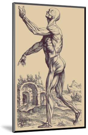 The Second Plate of the Muscles-Andreas Vesalius-Mounted Art Print