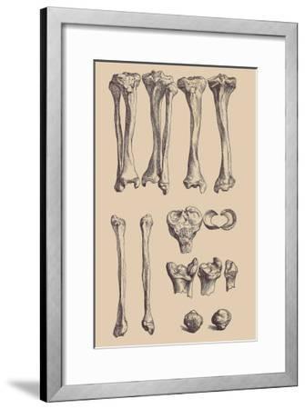 Leg Bones-Andreas Vesalius-Framed Art Print