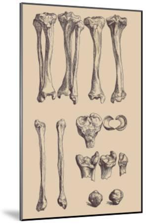 Leg Bones-Andreas Vesalius-Mounted Art Print