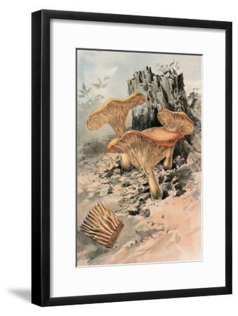 Canthareius Cibarius-William Hamilton Gibson-Framed Art Print