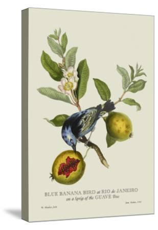 Blue Banana Bird at Rio de Janeiro-J^ Forbes-Stretched Canvas Print
