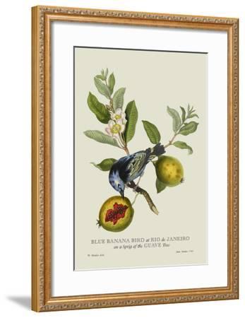 Blue Banana Bird at Rio de Janeiro-J^ Forbes-Framed Art Print