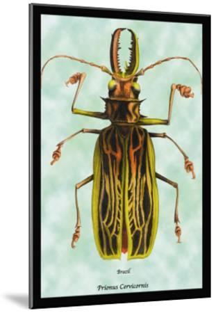 Beetle: Brazilian Prionus Cervicornis-Sir William Jardine-Mounted Art Print