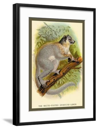 The White-Footed Sportive Lemur-Sir William Jardine-Framed Art Print