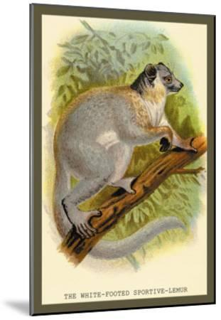 The White-Footed Sportive Lemur-Sir William Jardine-Mounted Art Print