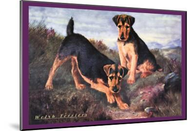 Two Welsh Terriers--Mounted Art Print