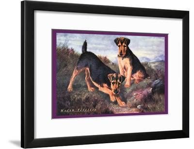 Two Welsh Terriers--Framed Art Print
