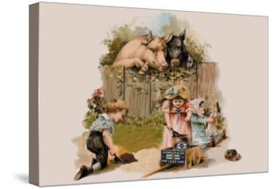 Curious Pigs--Stretched Canvas Print