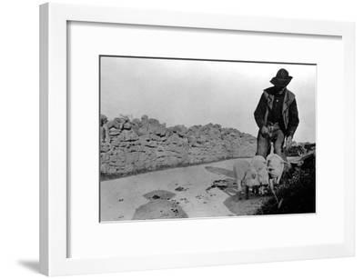 Man and His Pigs--Framed Art Print
