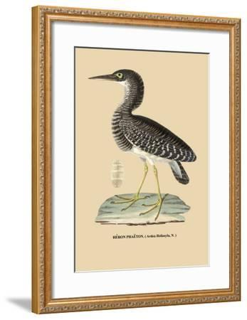 Heron Phaeton--Framed Art Print