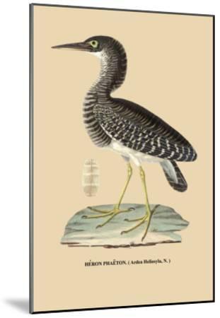 Heron Phaeton--Mounted Art Print