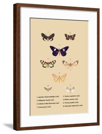 Agarista a Emorrhoidalis, Guer--Framed Art Print
