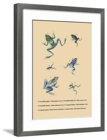 Grenouille Papoue--Framed Art Print
