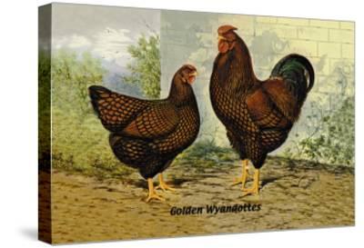 Golden Wyandottes--Stretched Canvas Print