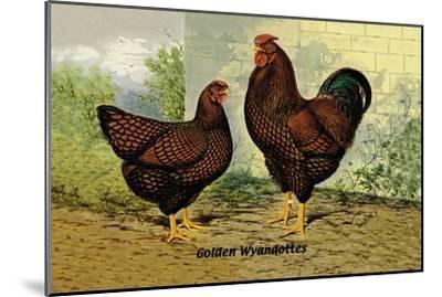 Golden Wyandottes--Mounted Art Print