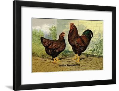 Golden Wyandottes--Framed Art Print