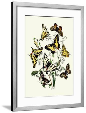 Butterflies: P. Podaliris, P. Alexanor-William Forsell Kirby-Framed Art Print
