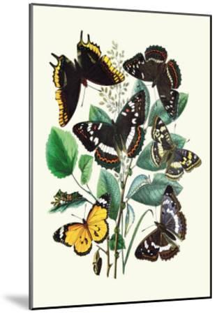 Butterflies: L. Populi, A. Iris-William Forsell Kirby-Mounted Art Print