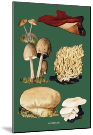 Mushrooms--Mounted Art Print