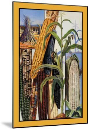 Indian Corn--Mounted Art Print