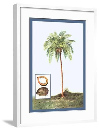 Coconut--Framed Art Print