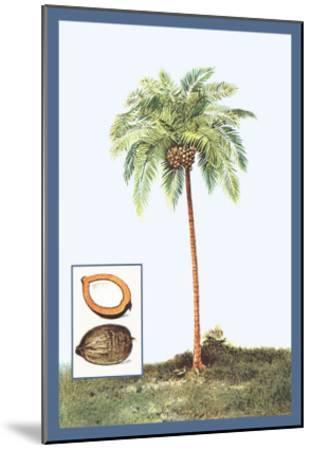 Coconut--Mounted Art Print