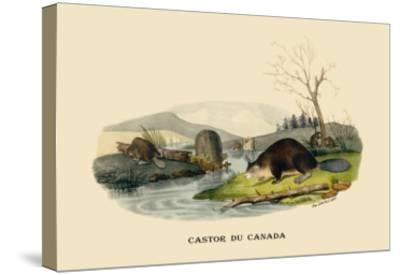 Castor du Canada-E^f^ Noel-Stretched Canvas Print