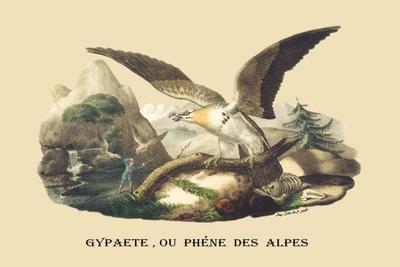 Gypaete, Ou Phene des Alpes-E^f^ Noel-Stretched Canvas Print