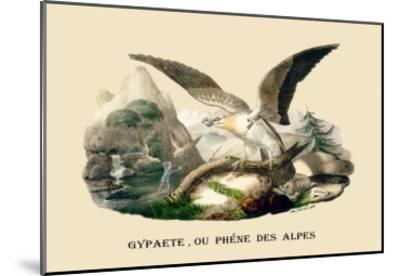 Gypaete, Ou Phene des Alpes-E^f^ Noel-Mounted Art Print
