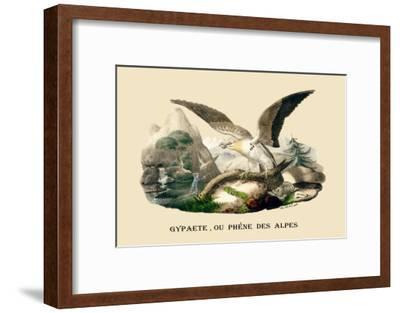 Gypaete, Ou Phene des Alpes-E^f^ Noel-Framed Art Print