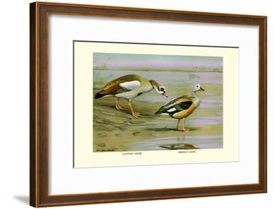 Egyptian and Orinoco Goose-Louis Agassiz Fuertes-Framed Art Print