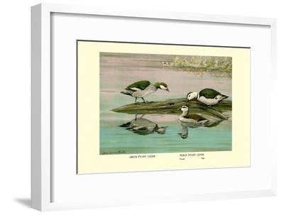 Green and Indian Pygmy Goose-Louis Agassiz Fuertes-Framed Art Print