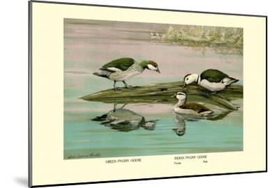 Green and Indian Pygmy Goose-Louis Agassiz Fuertes-Mounted Art Print