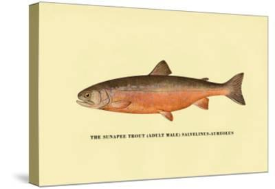 The Sunapee Trout-H^h^ Leonard-Stretched Canvas Print