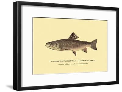The Brook Trout, Showing Subdued or Early Summer Coloration-H^h^ Leonard-Framed Art Print